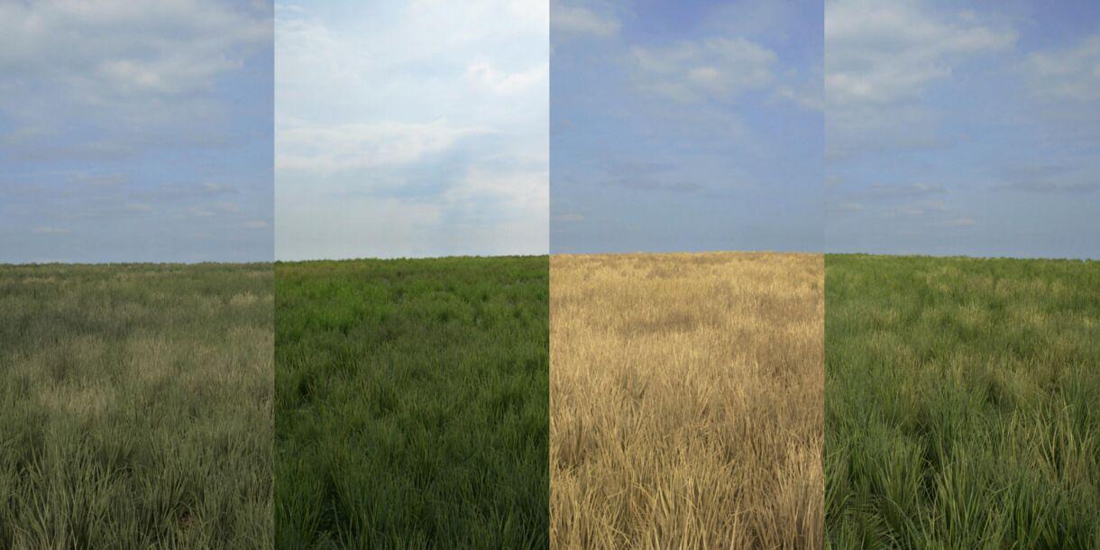 Advanced Grass Material for UE4