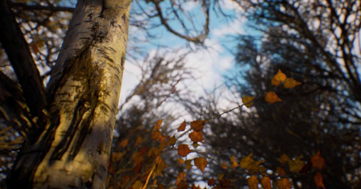 A Free Birch Tree Substance