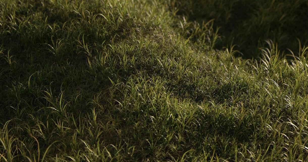 Wild Green: 3D Grass for Natural Landscapes