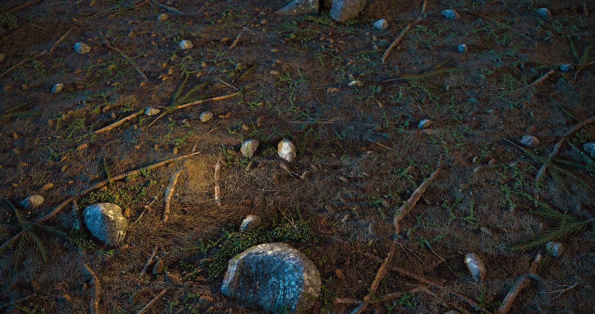 Forest Ground Substance Breakdown