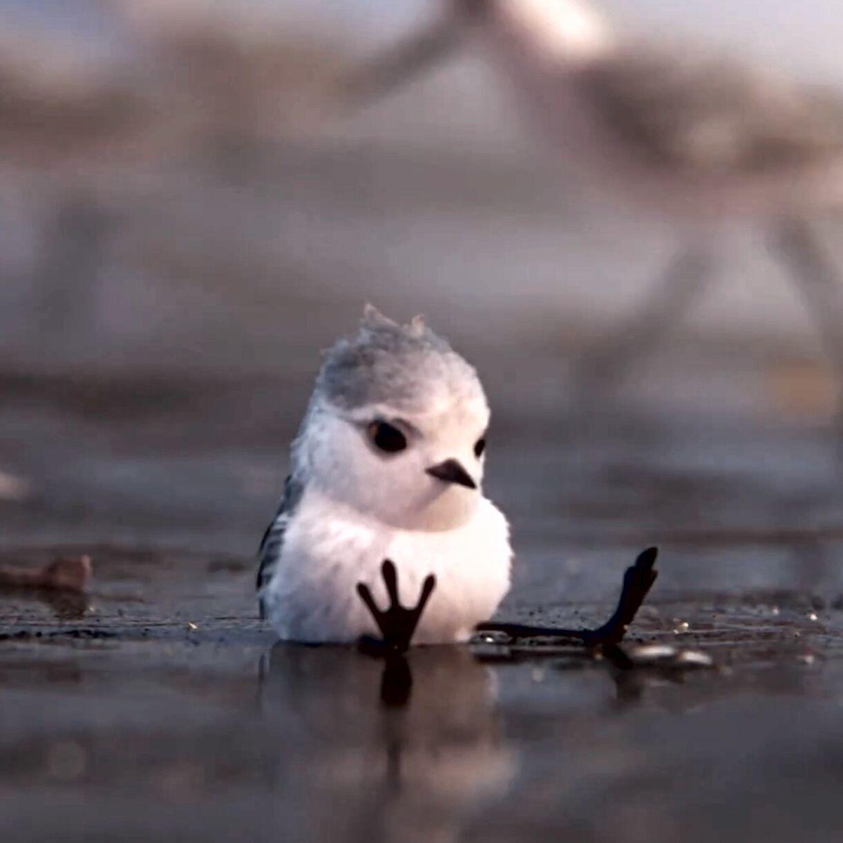Pixar's New Short Piper Looks Amazing