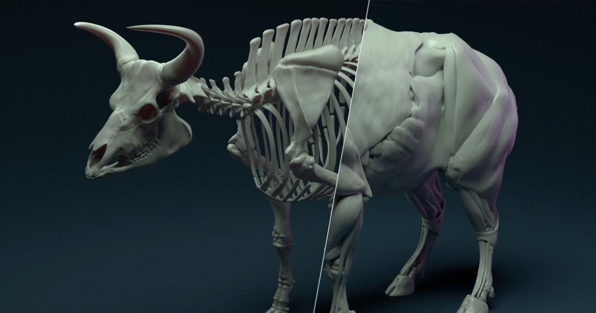 Building a Bovine Skeleton & Muscle System
